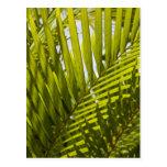 Mauritius, Central Mauritius, Moka, palm 2 Post Cards