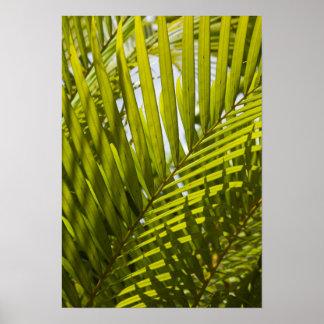 Mauritius, Central Mauritius, Moka, palm 2 Poster