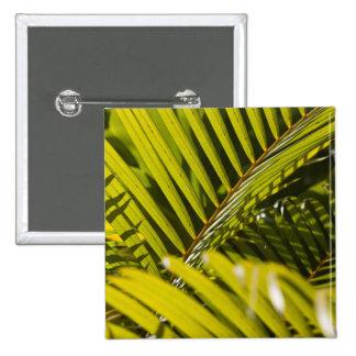 Mauritius, Central Mauritius, Moka, palm Button