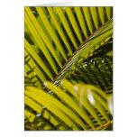 Mauritius, Central Mauritius, Moka, palm Card