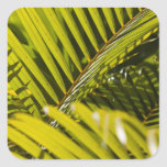 Mauritius, Central Mauritius, Moka, palm Square Sticker