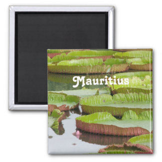 Mauritius Lily Pads 2 Inch Square Magnet
