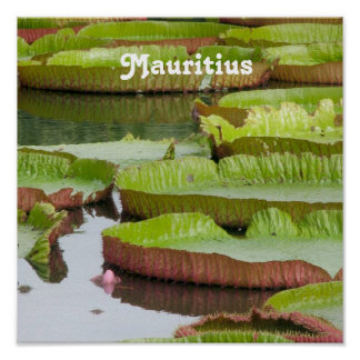 Mauritius Lily Pads Print