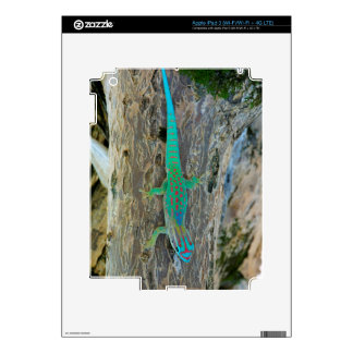 Mauritius Lowland Forest Day Gecko Decal For iPad 3