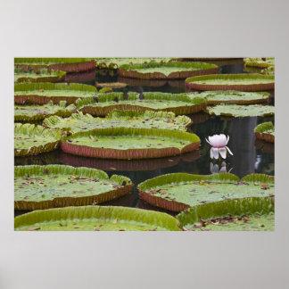 Mauritius, Pamplemousses, SSR Botanical Poster