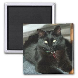 Mauser Cat Enjoys The Sun Magnet
