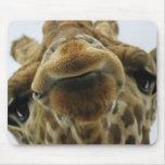 Mauspad Giraffe Kuss Tapetes De Raton