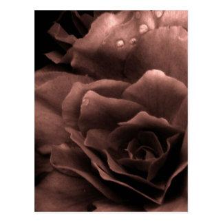 Mauve Close Up of a Double Begonia Postcard