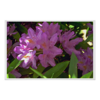 Mauve Colored Flowers Poster