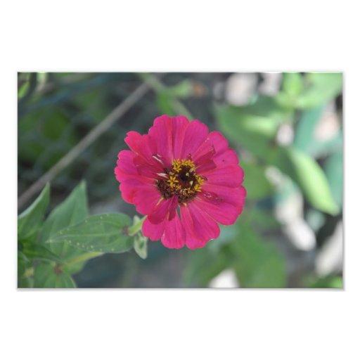 Mauve flower art photo