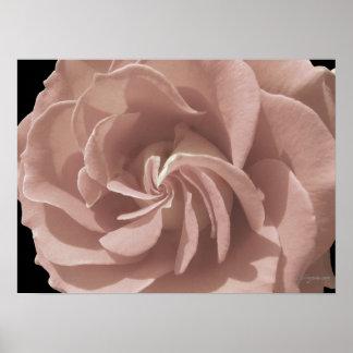 Mauve Rose Spiral Swirl Poster Prints