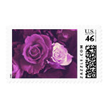 Mauve Roses in Bloom Stamps