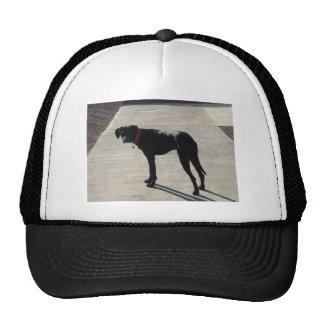 Max Trucker Hat