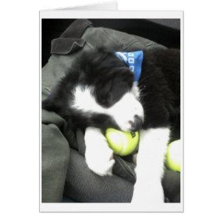 Max pup card