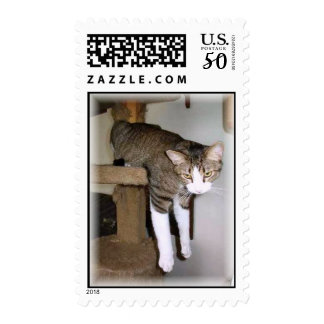 Max the acrobatic cat postage