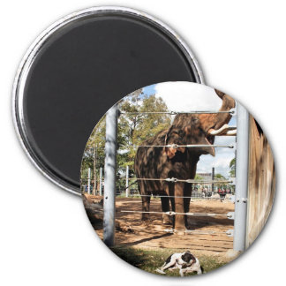 Max The Barn Dog & Asian Elephant Fridge Magnet