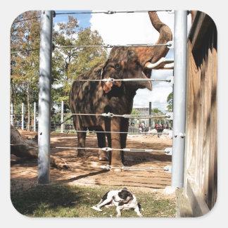 Max The Barn Dog & Asian Elephant Square Sticker