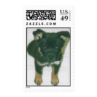 maxie pup postage