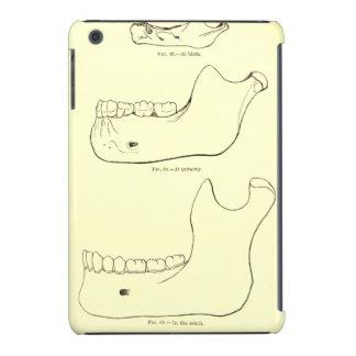 Maxilar inferior de la anatomía el   del vintage fundas de iPad mini retina
