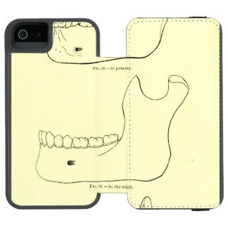 Maxilar inferior de la anatomía el   del vintage funda cartera para iPhone 5 watson
