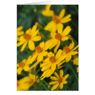 """Maximilian's Sunflower"" Greeting Card"