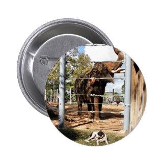 Máximo el perro del granero y el elefante asiático pin