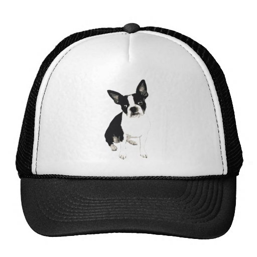 Maxx Boston Hat