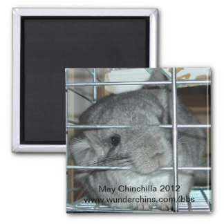 May chinchilla 2012 magnet