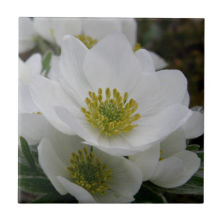 May Flower, Anemone narcissiflora Ceramic Tile