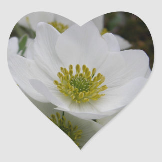 May Flower, Anemone narcissiflora Stickers