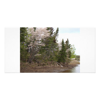 May Flowers 1, Bass River, NB Picture Card