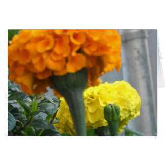 May flowers bring joy card