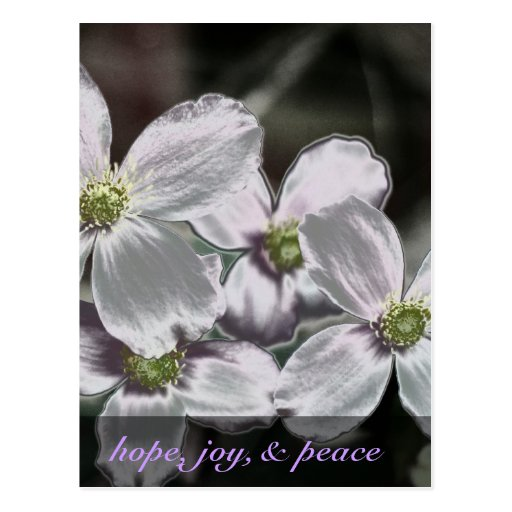 May God give you hope, joy, and peace Romans 15:13 Postcard