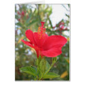 May Hibiscus Greeting Card