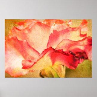May Rose Print