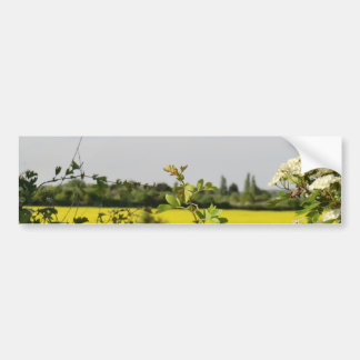 May Tree and Field at Beltane Car Bumper Sticker