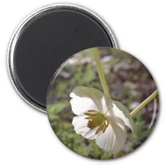 Mayapple Bloom in the Ozarks Magnet