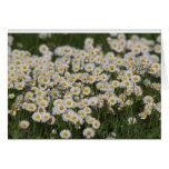 Mayday daisies stationery note card