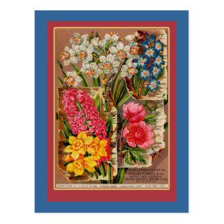 Mayflower Seed Packet Vintage Illustration Postcard