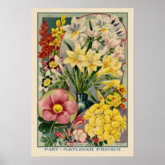Mayflower Vintage Seed Cover Print