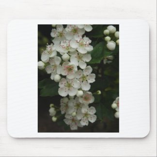 Mayflowers Mouse Pad