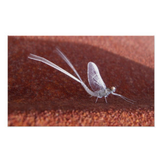 Mayfly in the Breeze Posters