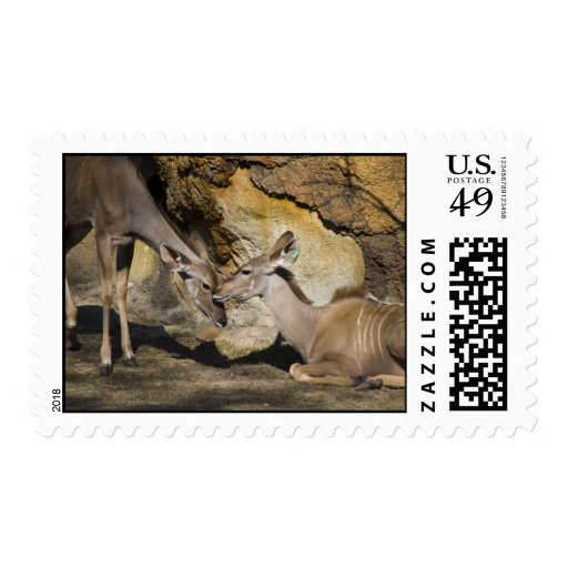 Mayor afecto de Kudu Franqueo