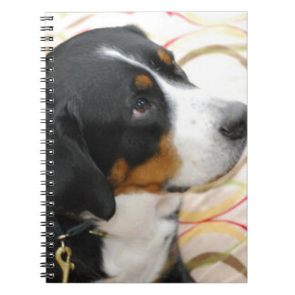 Mayor cuaderno suizo del perro de la montaña