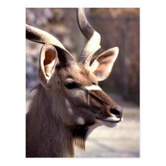 mayor kudu tarjetas postales