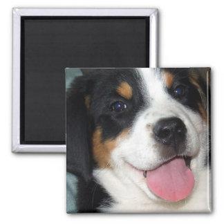 Mayor perrito suizo del perro de la montaña imán cuadrado