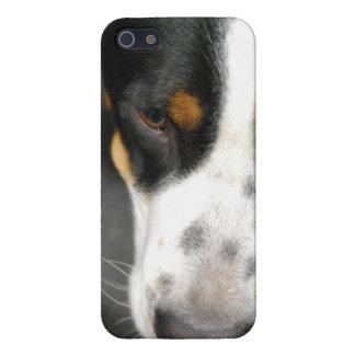 Mayor perro suizo de la montaña iPhone 5 fundas