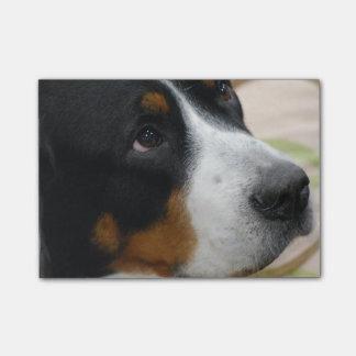 Mayor perro suizo de la montaña post-it nota