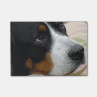 Mayor perro suizo de la montaña post-it® nota