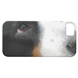 Mayor perro suizo dulce de la montaña iPhone 5 coberturas